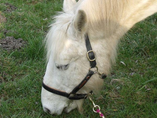 Que mange le cheval - Que mange les punaises ...