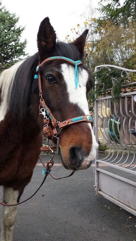 bouclerie couverture chevaux